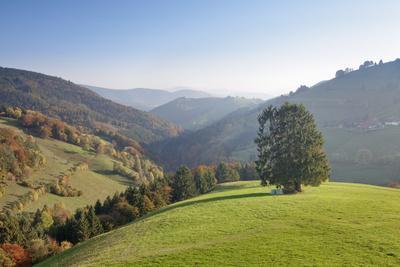 https://imgc.allpostersimages.com/img/posters/single-tree-on-hill-wiedener-eck-black-forest-baden-wurttemberg-germany_u-L-Q1EY5QN0.jpg?artPerspective=n