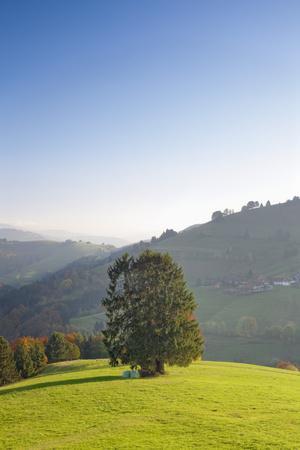 https://imgc.allpostersimages.com/img/posters/single-tree-on-hill-wiedener-eck-black-forest-baden-wurttemberg-germany_u-L-Q1EY9PF0.jpg?artPerspective=n