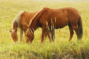 Horses at Ease by sinopics