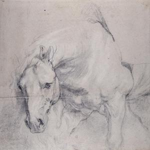Head and Forequarters of a Gray Horse by Sir Anthony Van Dyck