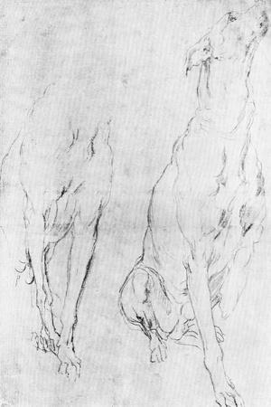 Study for the Greyhound in the Portrait of the Duke of Richmond, C1634