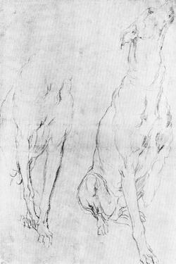 Study for the Greyhound in the Portrait of the Duke of Richmond, C1634 by Sir Anthony Van Dyck