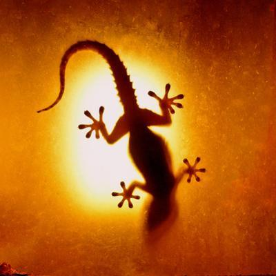 Artistic Backlight Shot of a Gecko, Nicely Shaped.