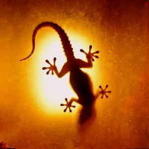 Artistic Backlight Shot of a Gecko, Nicely Shaped. by Sir Francis Canker Photography