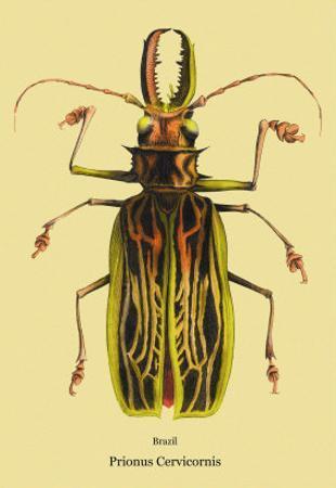 Beetle: Brazilian Prionus Cervicornis