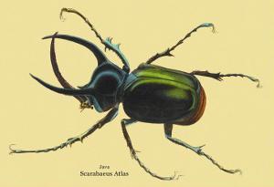 Beetle: Scarabaeus Atlas of Java by Sir William Jardine