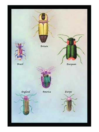 Beetles of America, Britain, Brazil, England and Europe