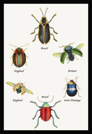 Beetles of Brazil, Britain, England and Saint Domingo