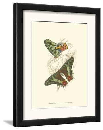 Butterflies IV