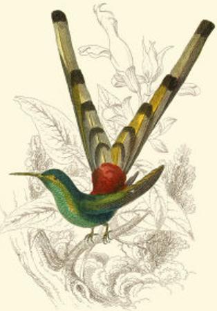 Jardine Hummingbird II