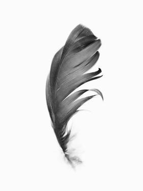Black Feather by Sisi and Seb