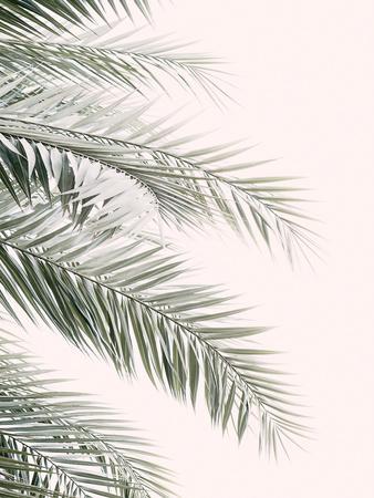 Blush Palm Leaf