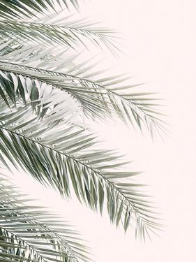 Blush Palm Leaf by Sisi and Seb