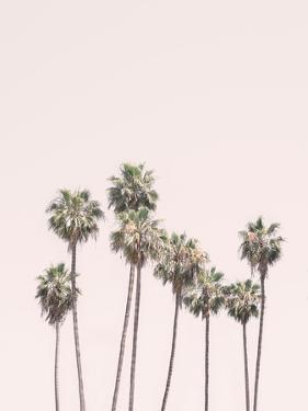 Blush Palm Trees by Sisi and Seb
