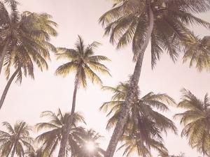 Blush Palms by Sisi and Seb