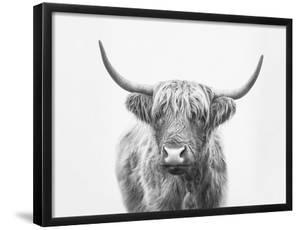 Highland Bull by Sisi and Seb