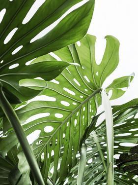 Jungle by Sisi and Seb