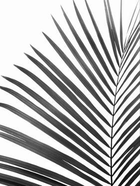 Palm Leaf by Sisi and Seb