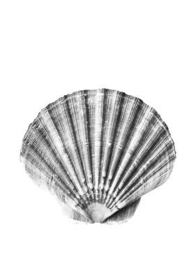 Sea Shell by Sisi and Seb