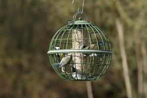 Siskin and Tits on Squirrel Proof Globe Bird Feeder