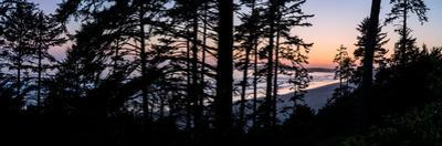 Sitka Spruce trees on Long Beach at sunset, Vancouver Island