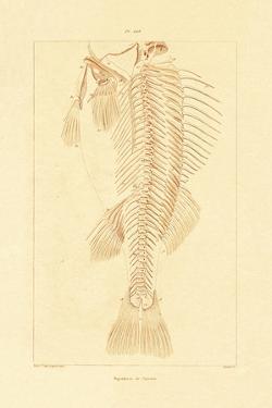 Skeleton, 1833-39