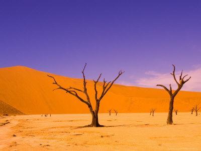 https://imgc.allpostersimages.com/img/posters/skeleton-trees-in-dead-vlei-namibia-world-heritage-site-namibia_u-L-P587T00.jpg?p=0