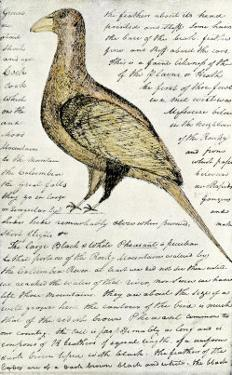 Sketch by William Clark of Cock of the Plains in the Lewis and Clark Expedition Diary