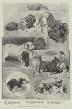 https://imgc.allpostersimages.com/img/posters/sketches-at-the-kennel-club-show-crystal-palace_u-L-PVWB140.jpg?p=0