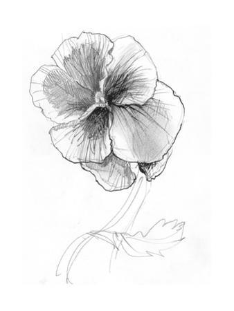 Sketchy Pencil Drawing of Pansy Flower