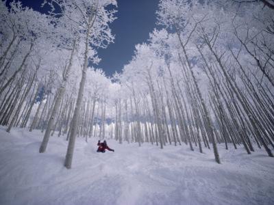 Skiing Through the Trees