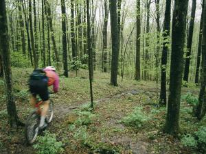 A Bicyclist Rides Through the Woods by Skip Brown
