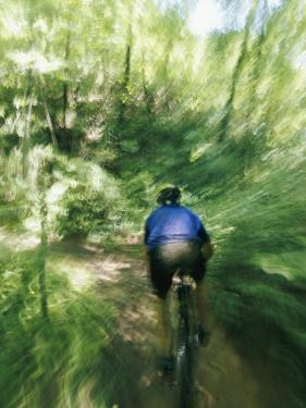 A Mountain Bicyclist Races Down a Forest Trail by Skip Brown