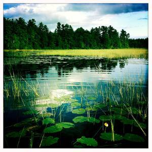 Lily Pads and Grasses in a Fresh Water Marsh Off Sebago Lake by Skip Brown