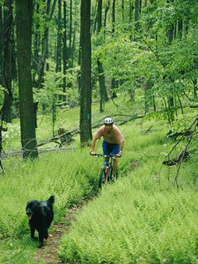 Mountain Biker and Dog on Single Track Trail Through Ferns by Skip Brown