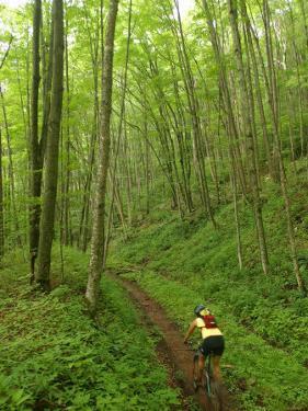 Mountain Biker on Props Run, a Single Track Trail by Skip Brown