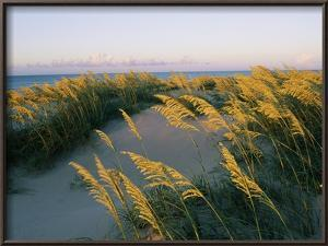 Sea Oats, Dunes, and Beach at Oregon Inlet by Skip Brown