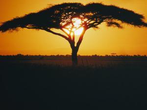 Sunset and Trees, Serengeti Plains, Tanzania by Skip Brown