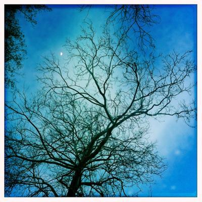 The Moon Behind a Bare Sycamore Tree by Skip Brown