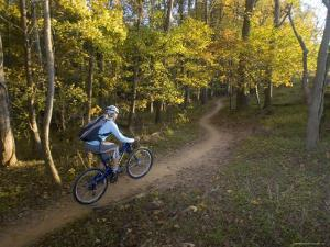 Woman Mountain Biker Rides Singletrack Trail Through Woods by Skip Brown