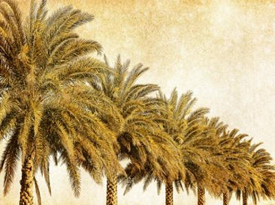 Palms on Brown I