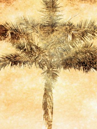 Palms on Brown IV