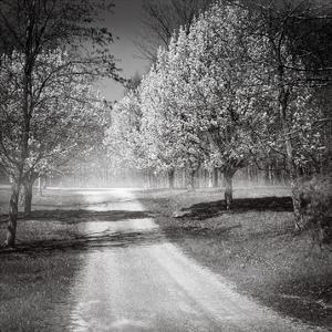 Southern Swing I by Skip Nall