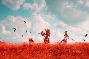 Photo of Summer Landscape Shot in the IR Spectrum by Skreidzeleu