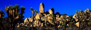 Skull Rock and Joshua trees at Joshua Tree National Park, California, USA