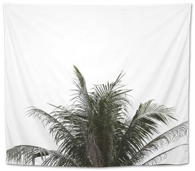 Leaves of Palm Tree on Isolated and White Background. by sky1991