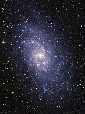Pinwheel Galaxy (M33) by Slawik Birkle