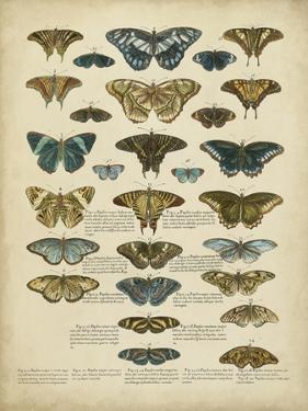 Tabula De Papilio by Sloan