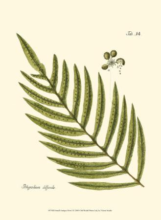 Small Antique Fern I