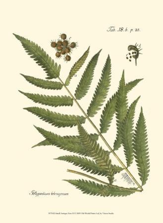 Small Antique Fern II
